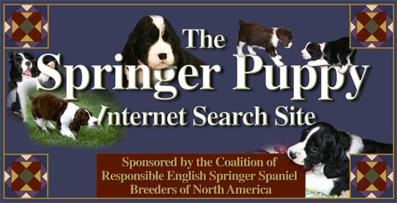 Cambrian Springers
